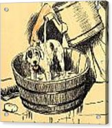 Washed By Mary - A Dog Day Collection 4 Of 27 Acrylic Print by Cecil Aldin