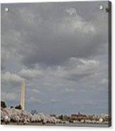 Washington Monument - Cherry Blossoms - Washington Dc - 011333 Acrylic Print by DC Photographer