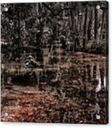 Washington Oaks Acrylic Print by Mario Celzner