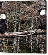 Watchful Eyes Acrylic Print by Elizabeth Winter