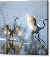 Water Ballet  Acrylic Print by Saija  Lehtonen