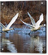 Water Dance Acrylic Print by Mike  Dawson