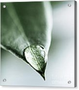 Water Drop On Leaf Acrylic Print by Elena Elisseeva