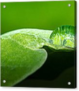 Water Drop Acrylic Print by Tin Lung Chao