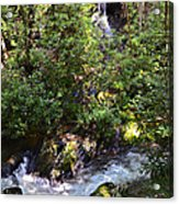 Water In The Forest Acrylic Print by Susan Leggett