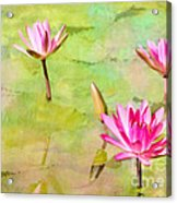Water Lilies Inspired By Monet Acrylic Print by Sabrina L Ryan
