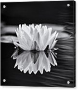 Water Lily Reflection Acrylic Print by Tim Gainey