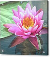 Water Lily Acrylic Print by Sandi OReilly