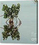 Water Pond  Acrylic Print by Javier Correa