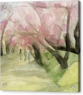 Watercolor Painting Of Cherry Blossom Trees In Central Park Nyc Acrylic Print by Beverly Brown Prints