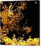 Wave Of Yellow Acrylic Print by Guy Ricketts