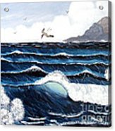 Waves And Tern Acrylic Print by Barbara Griffin