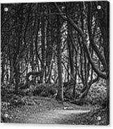 We Follow The Path Acrylic Print by Jon Glaser