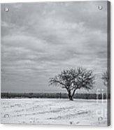 Weeping Souls Of Winter Desires Acrylic Print by Evelina Kremsdorf