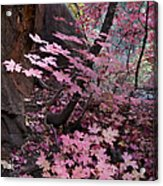 West Fork Fall Colors Acrylic Print by Dave Dilli