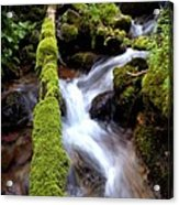 Wet And Green Acrylic Print by Steven Milner