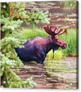 Wet And Wild Acrylic Print by Feva  Fotos