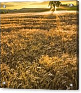 Wheat Fields Of Switzerland Acrylic Print by Debra and Dave Vanderlaan