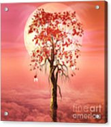 Where Angels Bloom Acrylic Print by John Edwards