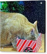 Whiskey's Present Acrylic Print by Diana Angstadt
