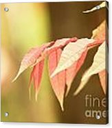 Whisper Acrylic Print by Andrew Brooks