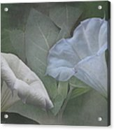 Whispers Of Angel Trumpet Datura Acrylic Print by Angie Vogel