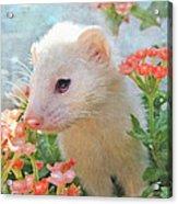 White Ferret Acrylic Print by Jane Schnetlage