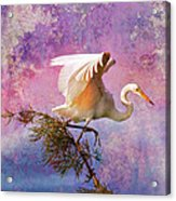 White Lake Swamp Egret Acrylic Print by J Larry Walker