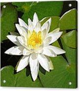 White Lotus Acrylic Print by Ellen Henneke