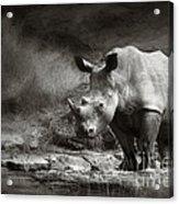 White Rhinoceros Acrylic Print by Johan Swanepoel