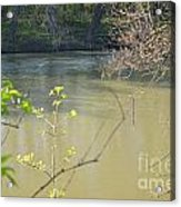 White River Acrylic Print by Alys Caviness-Gober