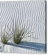 White Sands Grasses Acrylic Print by Steve Gadomski