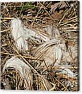 White-tailed Deer Hair Acrylic Print by Linda Freshwaters Arndt