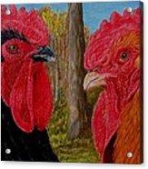 Who You Calling Chicken Acrylic Print by Karen Ilari