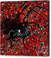 Wicked Widow - Rouge Acrylic Print by Al Powell Photography USA