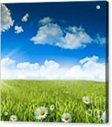 Wild Daisies In The Grass With A Blue Sky Acrylic Print by Sandra Cunningham