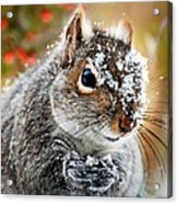 Wild Expedition Acrylic Print by Christina Rollo