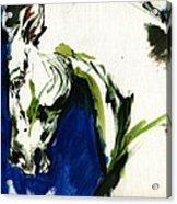 Wild Horse Acrylic Print by Angel  Tarantella
