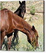 Wild Horse Mama And Her Baby Acrylic Print by Sabrina L Ryan