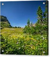 Wild Mountain Flowers Glacier National Park   Acrylic Print by Rich Franco