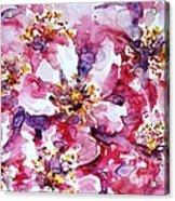 Wild Rose Acrylic Print by Zaira Dzhaubaeva