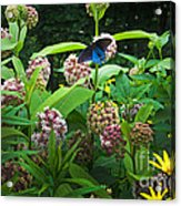 Wildflower Meadow Acrylic Print by Kenneth Murray