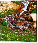 Wildflower Waterfall Acrylic Print by Tranquil Light  Photography