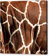 Wildlife Patterns  Acrylic Print by Aidan Moran