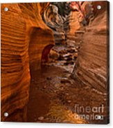 Willis Creek Slot Canyon Acrylic Print by Robert Bales