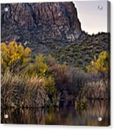 Willow Reflections Acrylic Print by Dave Dilli