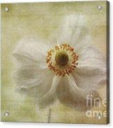 Windblown Acrylic Print by John Edwards