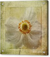 Windflower Textures Acrylic Print by John Edwards