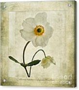 Windflowers Acrylic Print by John Edwards