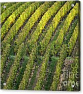 Wine Acreage In Germany Acrylic Print by Heiko Koehrer-Wagner